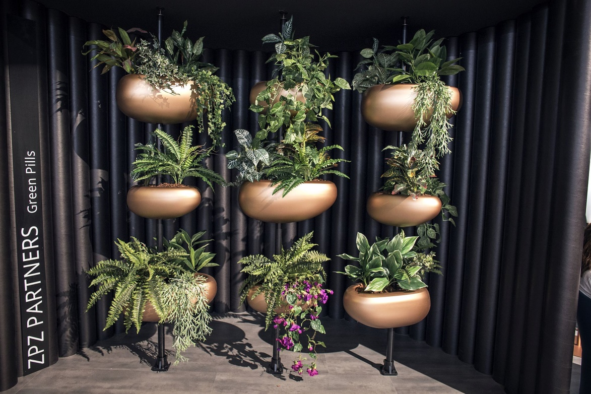 Indoor Plants Decoration