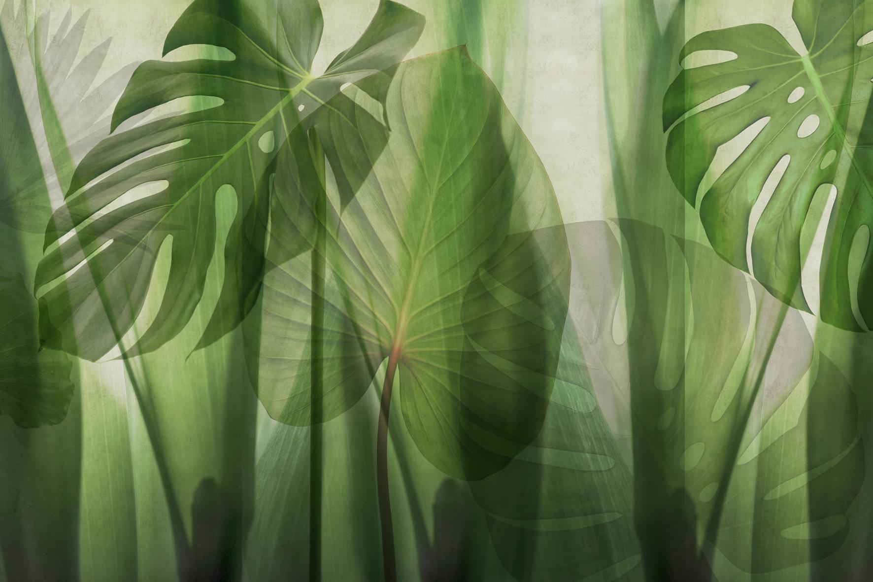 Leaf Background Wallpapaer