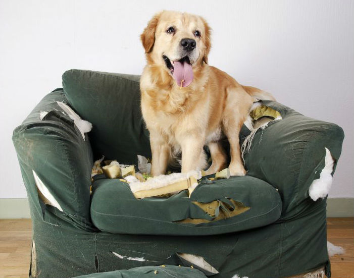 Sofa Damaged by Pet Dog